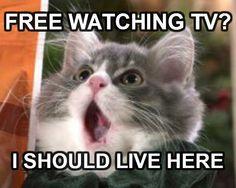OMG, FREE TV.