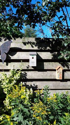 Thuus vogelhuisje in de regio