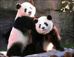 It's ok, panda friend. I still love you.