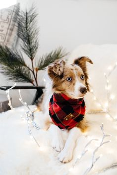 Gifts for Pets and Pet Lovers | eat/sleep/wear | Bloglovin'