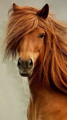 Horse, hest, gorgeous, brown, red, beautiful, animal, cute, nuttet, photo.
