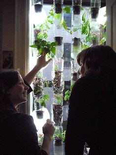 Horta na janela com reciclagem de garrafa pet