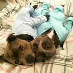 Just a couple of pitbulls in pajamas ♥♥
