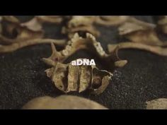 Written in Bone: Looking for Londoners - YouTube