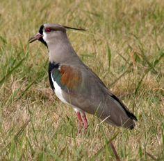 Aves Argentinas+yapa fotos de misiones                              …