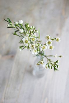Tableaux Elyse Wax - the barefoot bride Care For Your Indoor Crops It's a tough process to maintain Wax Flowers, Types Of Flowers, Vintage Flowers, White Flowers, Beautiful Flowers, Wedding Flowers, Summer Flowers, Wedding Bouquet, Cut Flower Garden