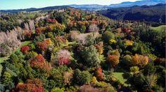 Trelinnoe Park - 30 Acres - Te Pohue, Hastings - 2800115