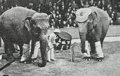 Circus animals were a popular attraction in the 1900s, around the time Mary was executed (...
