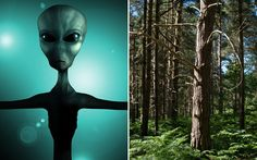 Newly released UFO files from the National Archives show that the UK's most   enduringly fascinating sighting remains the Rendlesham Forest incident, in   1980, when US servicemen reported encounters with aliens in Suffolk woodland.