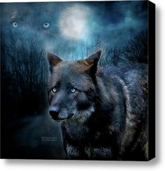 Midnight Spirit Stretched Canvas Print / Canvas Art By Carol Cavalaris
