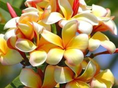 exotic flowers | tropical_Flower_Wallpaper+exotic+tropical+flowers+images.jpg