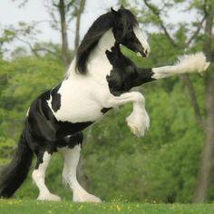irish horse   Je vous rassure, je ne vais pas en acheter un mais j'aimerais en ...