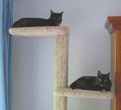 cat tree adjusted #cattrees - Make your cat happy - Catsincare.com!