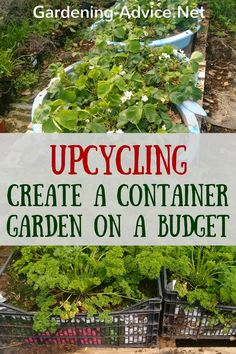 Container Gardening For Beginners Container Flower Gardening Tips - 10 Perennial Plants For Pots - Create a vegetable container garden in your backyard by reusing and upcycling! We show you how we grow herbs and veggies on a shoestring. Front Garden Landscape, Garden Landscaping, Landscaping Ideas, Urban Landscape, Gardening Supplies, How To Grow Watermelon, Gemüseanbau In Kübeln, Small Front Gardens, Container Gardening Vegetables