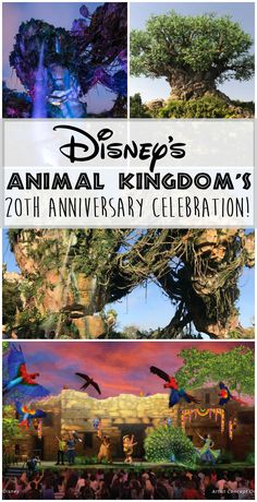 Disney's Animal Kingdom's 20th Anniversary, Disney's Animal Kingdom's 20th Anniversary Celebration, Animal Kingdom, Pandora The World of Avatar, Na'vi River Journey, Flight of passage