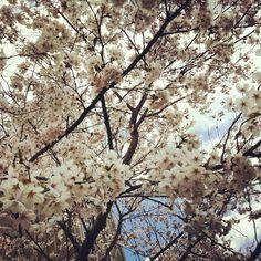 Cherry Tree. Wonderful!