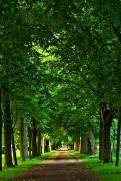 Beautiful World, Beautiful Images, Films Western, Landscape Photography, Nature Photography, Tree Tunnel, Forest Path, Green Nature, Walking In Nature
