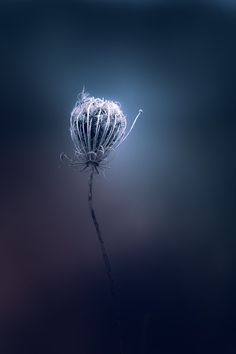 Paul Barson Photography
