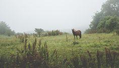 www.heddahestholm.wordpress.com Instagram: @heddussen #adventure #photography #summer #july #canon #lightroom #photoshop #norway #nature #horse #misty #foggy #fall