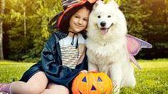peligros en halloween para mascotas