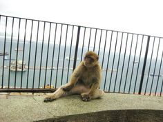 I'm not gonna lie, I'm a little freaked out about the apes. (Gibraltar)