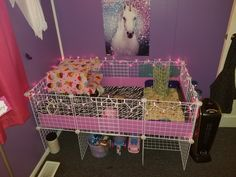 Beautiful New Guinea Pig Cage! Animal Cage, Pet Guinea Pigs, Pet Cage, Hamsters, Rabbits, Turtles, Fur Babies, Sydney, Hedgehog