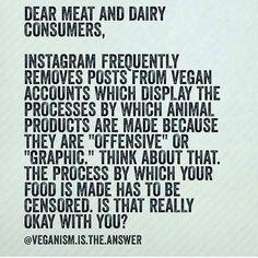 (28) #vegan - Cerca su Twitter