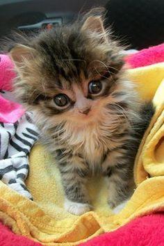 Omg  it's so cute