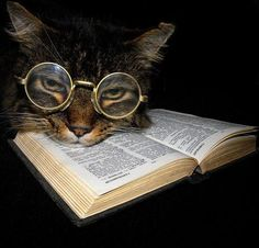 Whats a book without a cat?