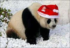 panda wearing a santa - Google Search