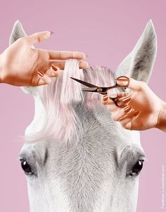 Editorial] Thomas Mangold : le cheval est une femmeCheval Cheval may refer to: Beauty Photography, Product Photography, Montage Photography, Funny Illustration, Illustrations, Artist Profile, Jolie Photo, Beauty Editorial, Wedding Beauty