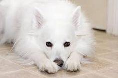 Resultado de imagem para cachorro