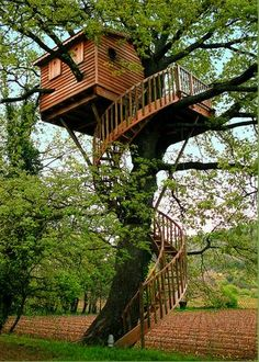 I want a super legit tree house! Think of how cool it would be to have game night in the tree house or to read a book when it's raining (or sunny).amazing, I know. Beautiful Tree Houses, Cool Tree Houses, House Beautiful, Tree House Designs, All Nature, In The Tree, Big Tree, Tree Tree, Tree Branches