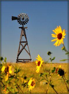Windmill & Wildflowers Northwestern Nebraska-looks just like my grannie's farm :) Country Farm, Country Life, Country Living, Country Roads, Nebraska, Farm Windmill, Windmill Art, Old Windmills, Country Scenes