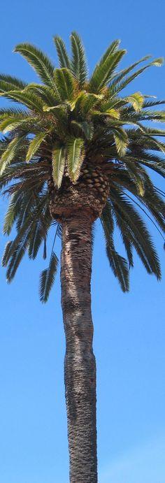 Tall Pam Tree - Long, Tall, Vertical Pins.