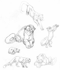 Character and Creature Design Notes: Claire Wendling's Cats.