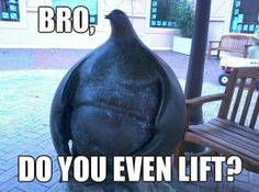 1000 images about do you even lift bro on pinterest do