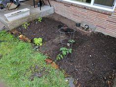 It begins... #gardening #garden #gardens #DIY #landscaping #home #horticulture #flowers #gardenchat #roses #nature