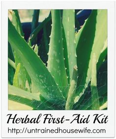 Herbal First Aid Kit - What do you keep at your house?