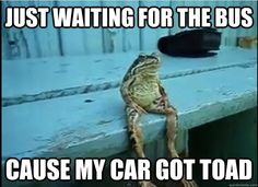 I'm feeling froggy this afternoon.
