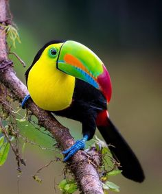 Exotic pets 784752303807237587 - image Source by Most Beautiful Birds, Pretty Birds, Love Birds, Tropical Birds, Exotic Birds, Exotic Pets, Animals And Pets, Baby Animals, Funny Animals