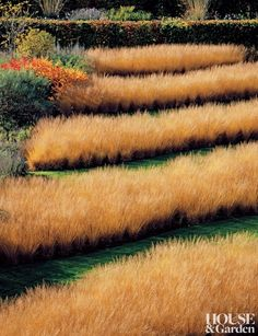 Contemporary Garden by Piet Oudolf in Yorkshire, England