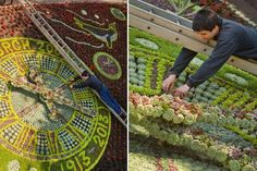 Floral Clock Marks Centenary of Edinburgh Zoo Floral Clock, Visit Edinburgh, Self Catering Cottages, Things To Do, The 100, Spaces, Things To Make, Todo List