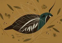 Mountain quail 1956