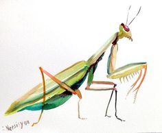 Praying Mantis original watercolor painting green by ORIGINALONLY, $24.00: Paintings Birds, Art Watercolor