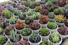 hmm, plants for favors