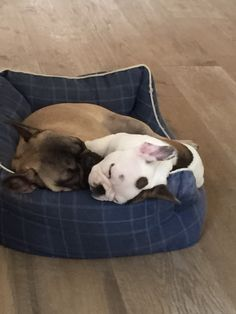 Sleepy frenchies