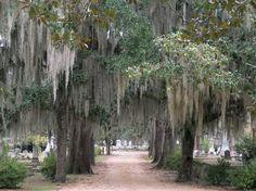 Photo of Old Live Oak Cemetery Selma, Alabama