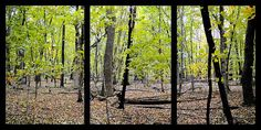 Carpet Of Leaves Triptych