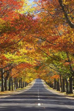 Autumn is the perfect time of year to take a drive in the town of Mount Macedon, Australia.